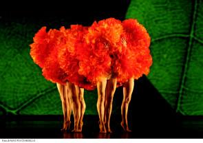 W Momix Forever al Festival Le Crociere di Orbetello e al Festival La Versiliana